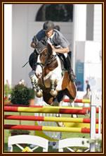 Universum S Nock Out Oldenburg Stallion Superior Equine